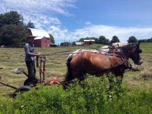 Don Barber turning hay at Rosebarb Farm -- one of Caroline's many small farms
