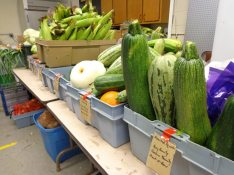 Food Pantry Produce 3