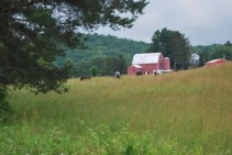 Rosebarb Farm -- one of Caroline's many small farms near the BCC